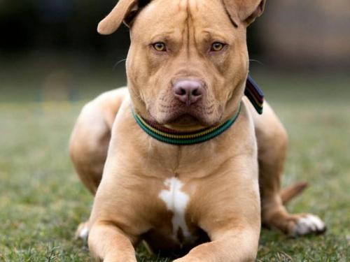 Мариупольца с бойцовской собакой, державшего в страхе соседей, накажут