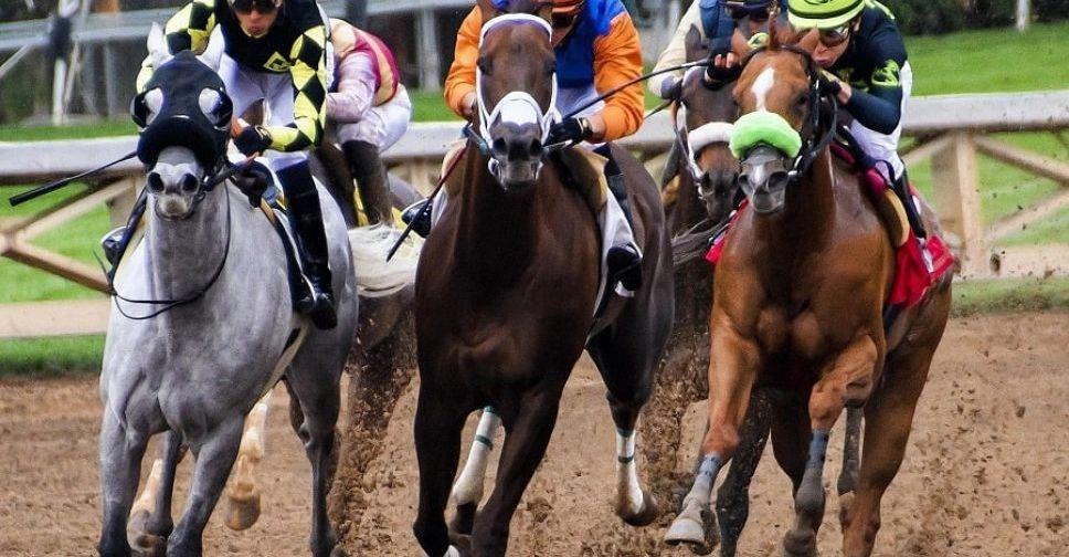 Развитие конной индустрии: под Мариуполем хотят открыть ипподром и устраивать скачки